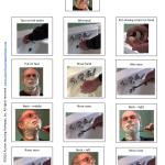 sample-page-shaving